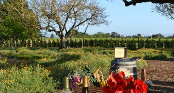 Wineries Happening In Sonoma County