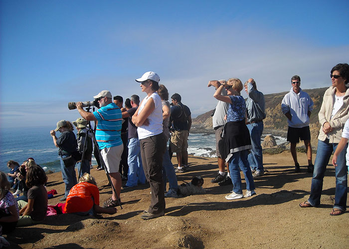 Whale Watching at Bodega Head