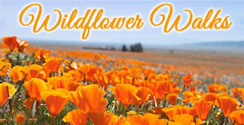 Wildflower Walks in Sonoma County